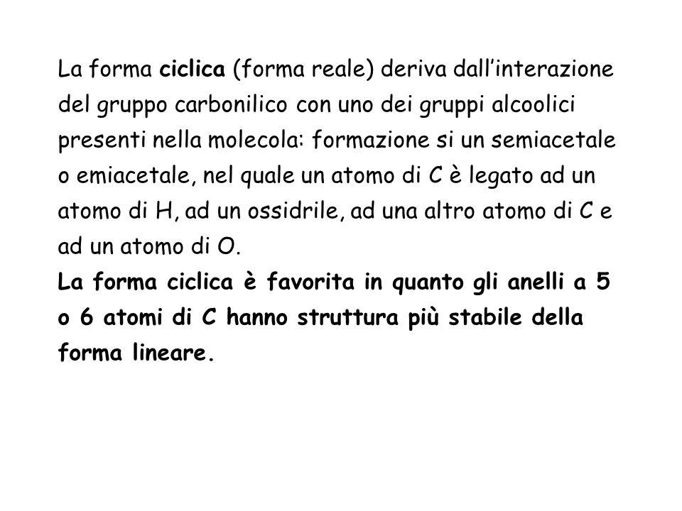 La forma ciclica (forma reale) deriva dallinterazione del gruppo carbonilico con uno dei gruppi alcoolici presenti nella molecola: formazione si un se