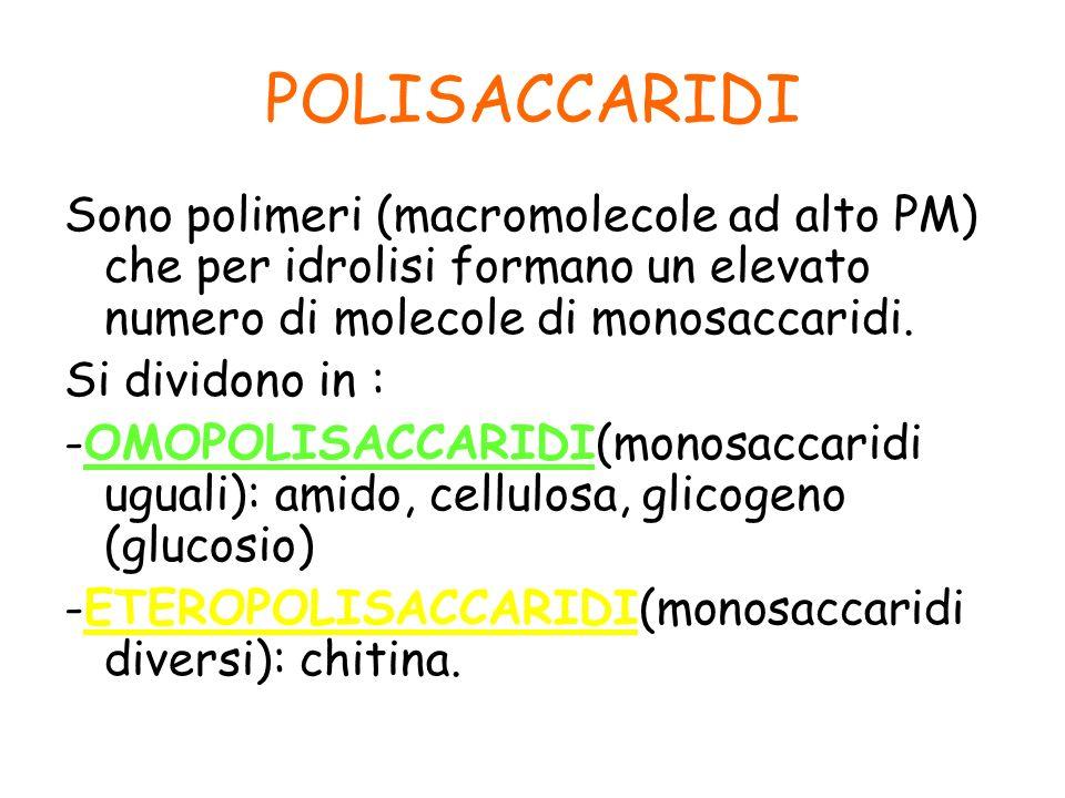 POLISACCARIDI Sono polimeri (macromolecole ad alto PM) che per idrolisi formano un elevato numero di molecole di monosaccaridi. Si dividono in : -OMOP