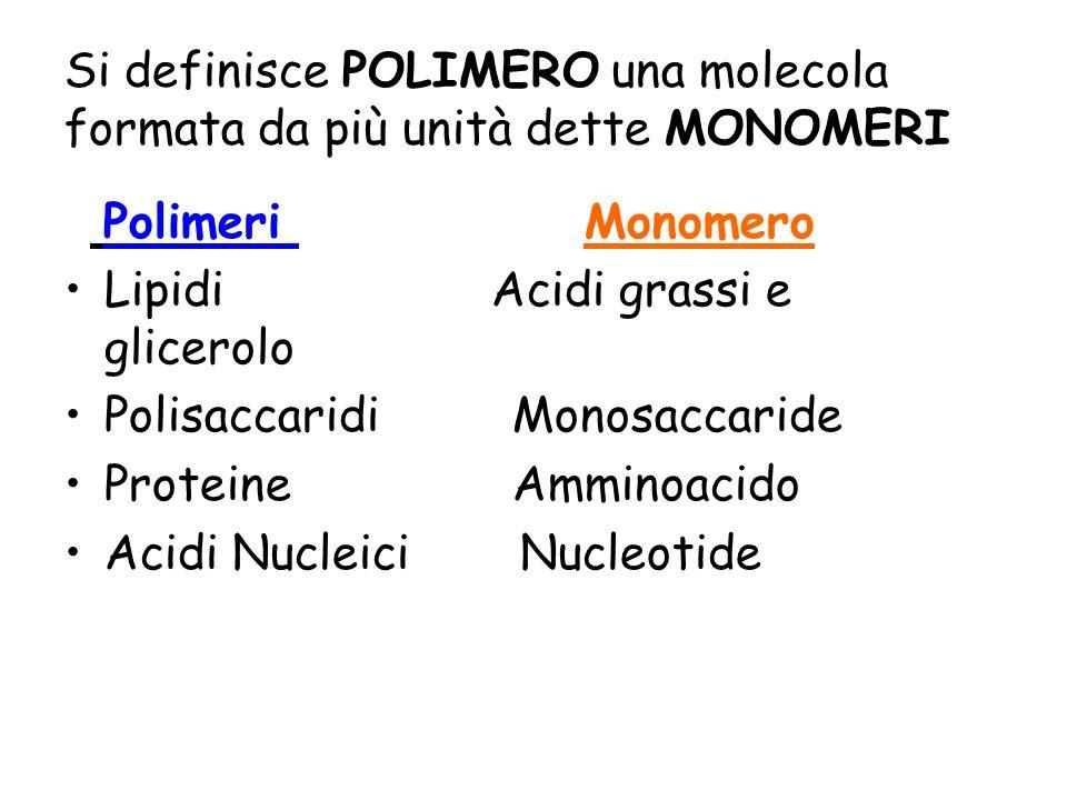 Si definisce POLIMERO una molecola formata da più unità dette MONOMERI Polimeri Monomero Lipidi Acidi grassi e glicerolo Polisaccaridi Monosaccaride P