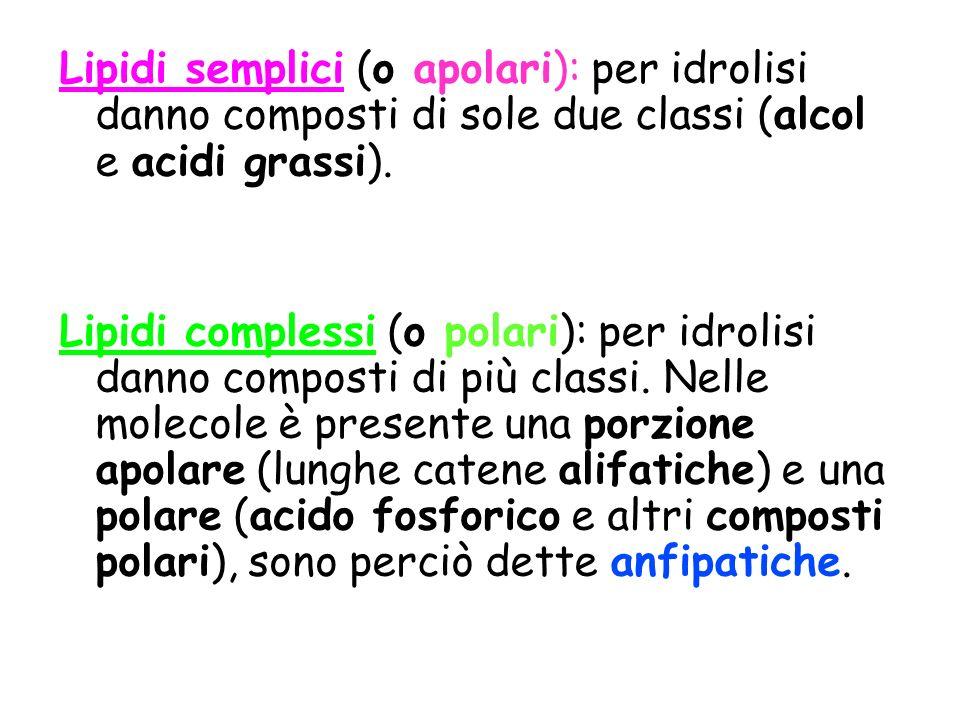 Lipidi semplici (o apolari): per idrolisi danno composti di sole due classi (alcol e acidi grassi). Lipidi complessi (o polari): per idrolisi danno co