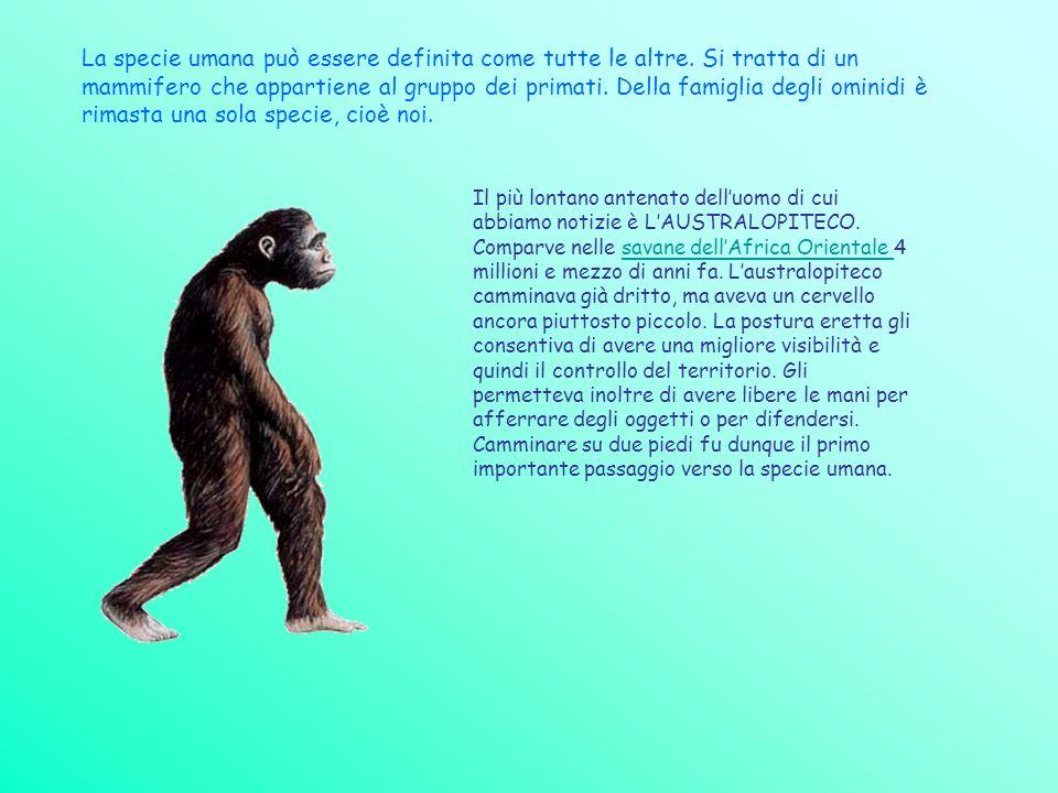 La specie umana può essere definita come tutte le altre. Si tratta di un mammifero che appartiene al gruppo dei primati. Della famiglia degli ominidi