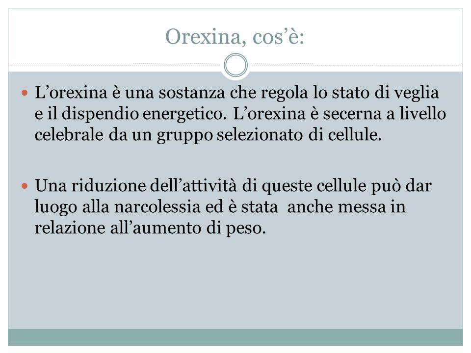 Orexina, cosè: Lorexina è una sostanza che regola lo stato di veglia e il dispendio energetico.