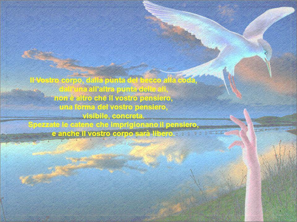 Gabbiano Jonathan Livingston Ciascuno di noi è, in verità, un'immagine del Grande Gabbiano, un'infinita idea di libertà, senza limiti..