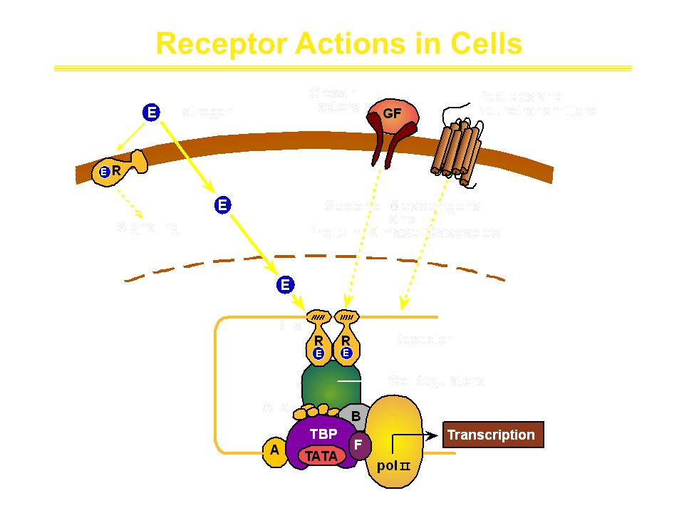 Receptor Actions in Cells (B. Katzenellenbogen et al. Recent Prog. Horm. Res.,2000)
