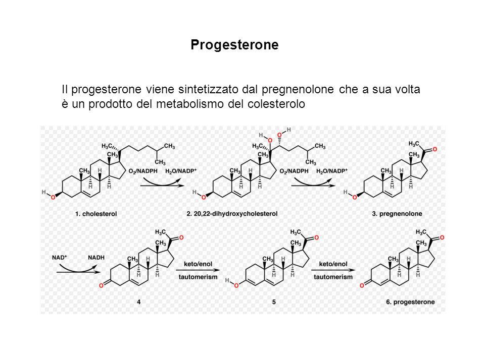 Progesterone Il progesterone viene sintetizzato dal pregnenolone che a sua volta è un prodotto del metabolismo del colesterolo