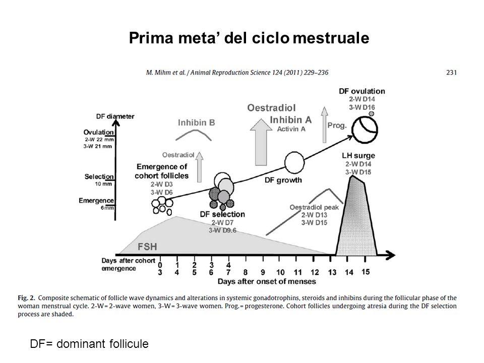 DF= dominant follicule Prima meta del ciclo mestruale
