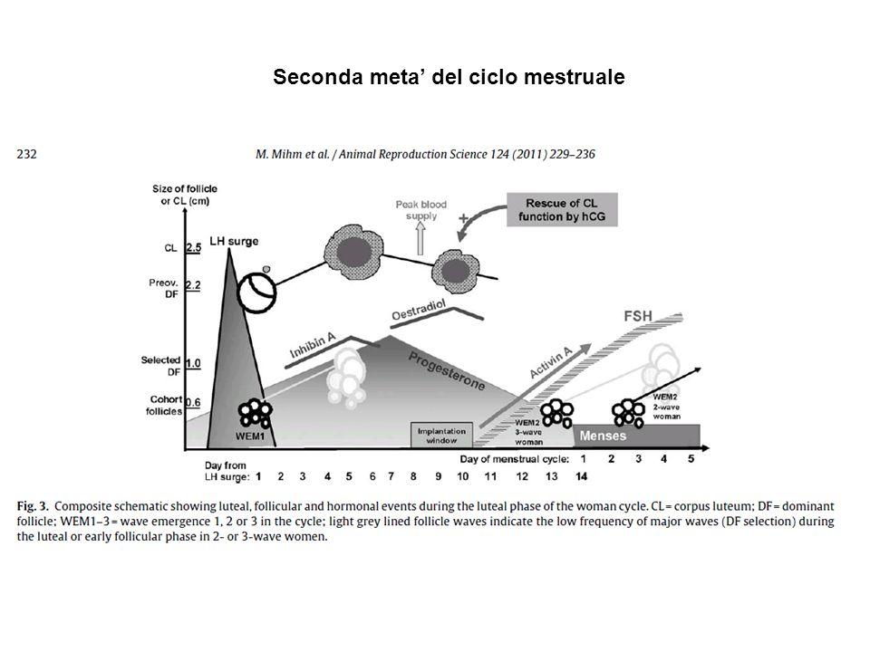 Seconda meta del ciclo mestruale