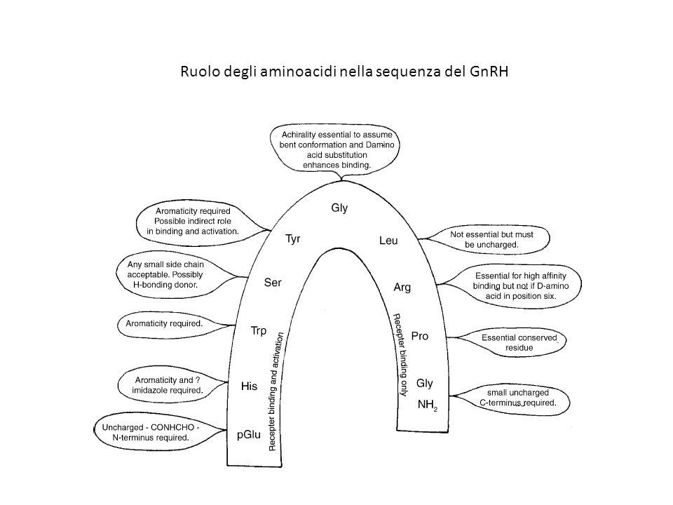Ruolo degli aminoacidi nella sequenza del GnRH