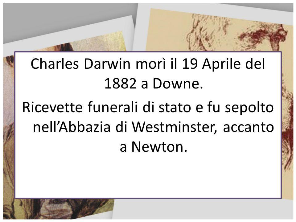 Charles Darwin morì il 19 Aprile del 1882 a Downe. Ricevette funerali di stato e fu sepolto nellAbbazia di Westminster, accanto a Newton.