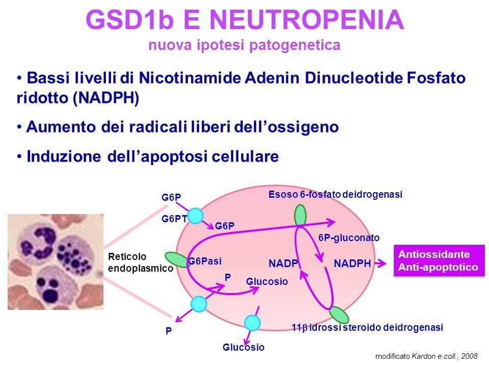 GSD1b E NEUTROPENIA nuova ipotesi patogenetica Bassi livelli di Nicotinamide Adenin Dinucleotide Fosfato ridotto (NADPH) Aumento dei radicali liberi dellossigeno Induzione dellapoptosi cellulare modificato Kardon e coll., 2008 G6P G6PT G6Pasi Esoso 6-fosfato deidrogenasi 11 idrossi steroido deidrogenasi P P Glucosio 6P-gluconato NADPNADPH Reticolo endoplasmico Antiossidante Anti-apoptotico Antiossidante Anti-apoptotico
