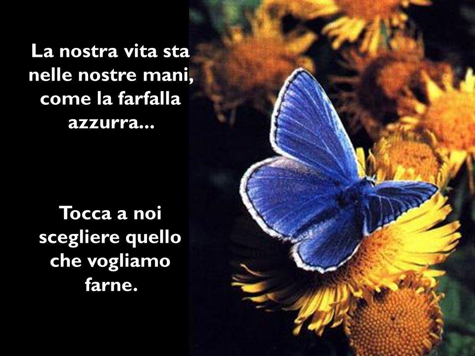 La nostra vita sta nelle nostre mani, come la farfalla azzurra... Tocca a noi scegliere quello che vogliamo farne.