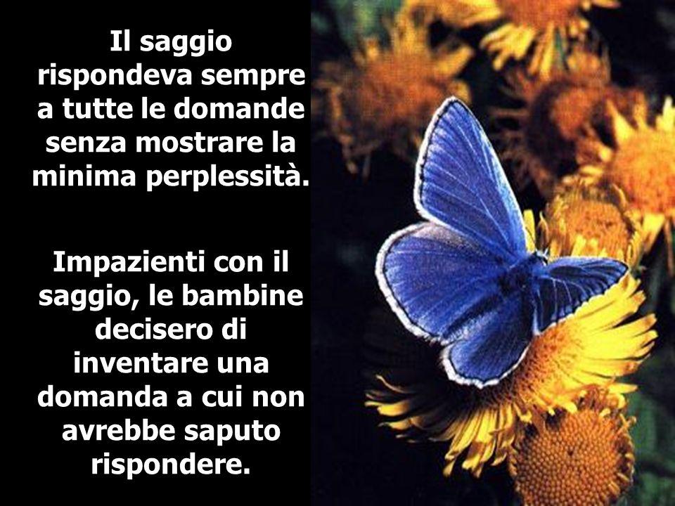 Allora, una di loro si presentò con una farfalla azzurra che avrebbe usato per ingannare il saggio.