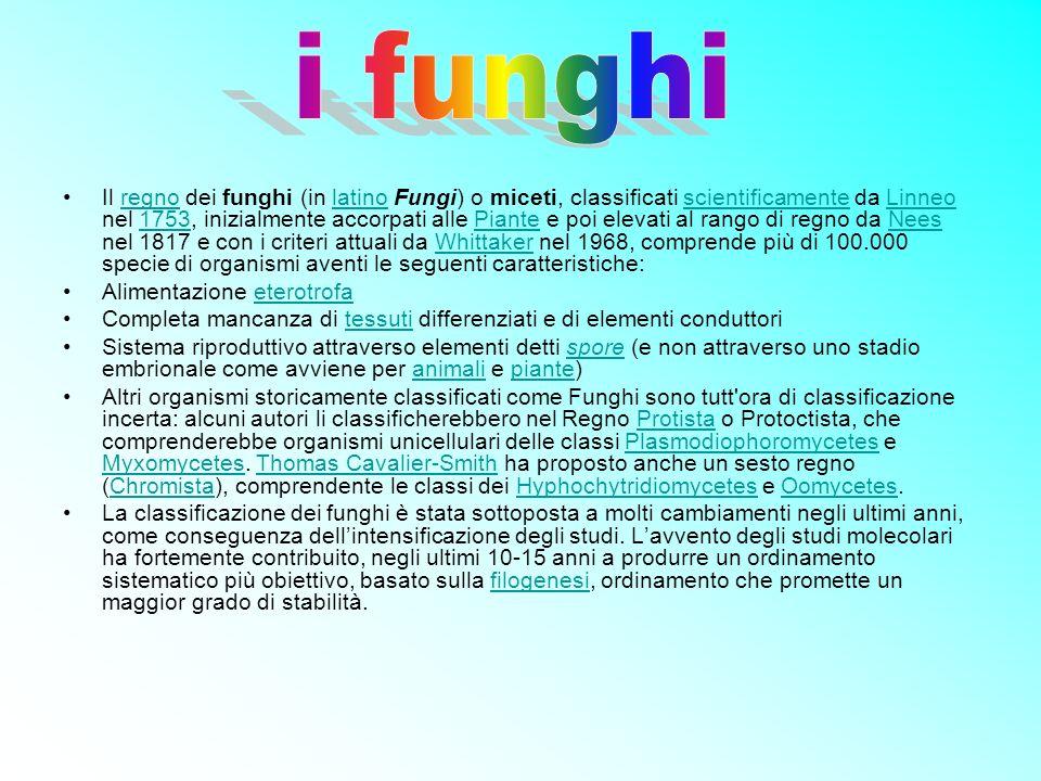 Il regno dei funghi (in latino Fungi) o miceti, classificati scientificamente da Linneo nel 1753, inizialmente accorpati alle Piante e poi elevati al