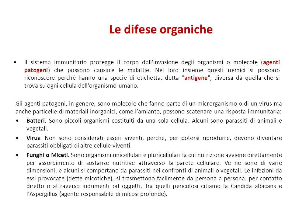 Le difese organiche Il sistema immunitario protegge il corpo dall'invasione degli organismi o molecole (agenti patogeni) che possono causare le malatt