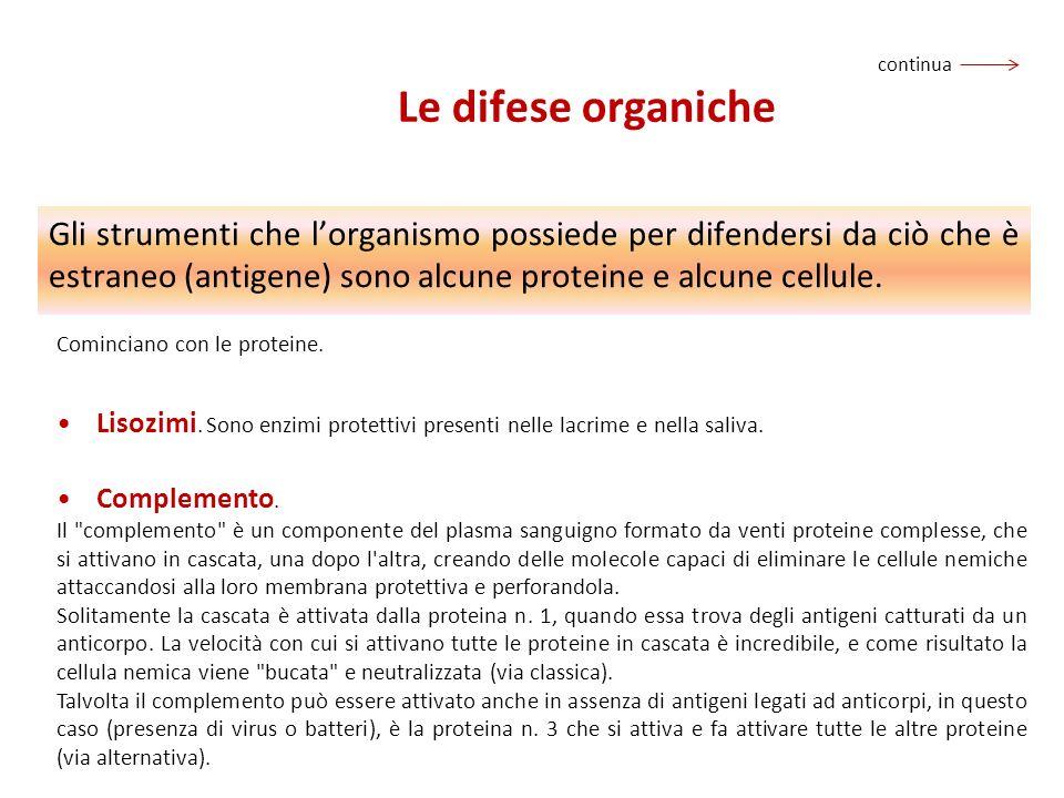 Le difese organiche Gli strumenti che lorganismo possiede per difendersi da ciò che è estraneo (antigene) sono alcune proteine e alcune cellule. Comin
