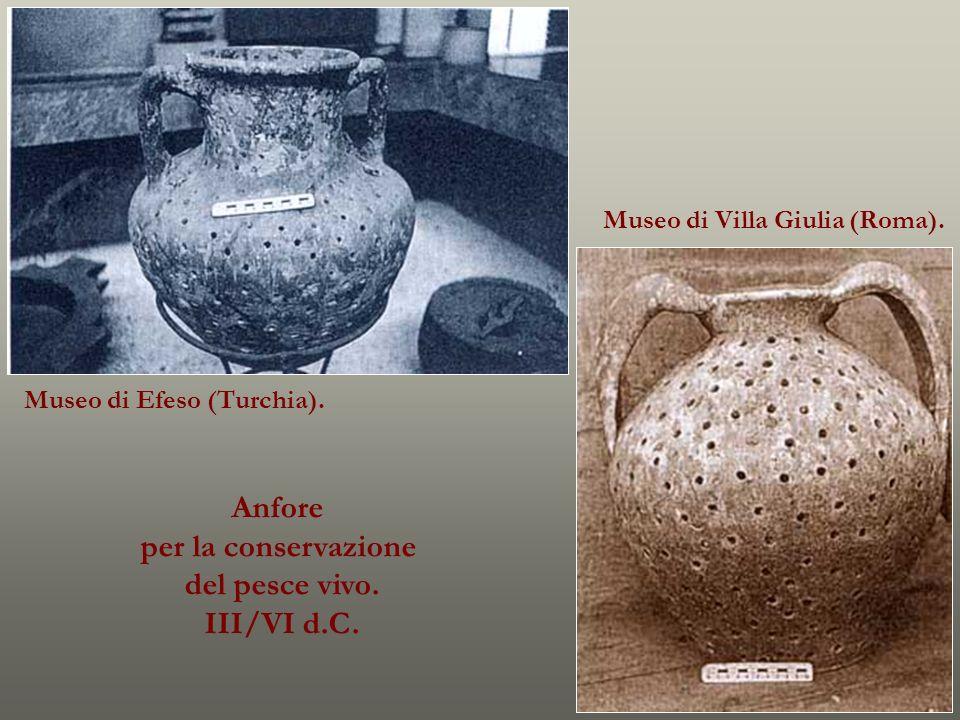 Anfore per la conservazione del pesce vivo. III/VI d.C. Museo di Efeso (Turchia). Museo di Villa Giulia (Roma).