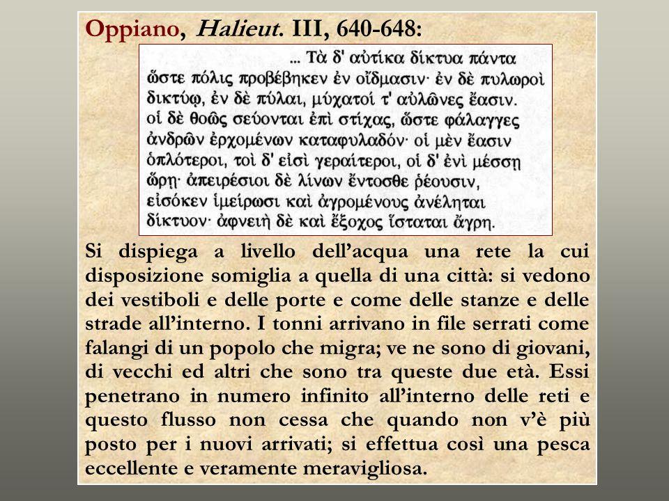 Oppiano, Halieut. III, 640-648: Si dispiega a livello dellacqua una rete la cui disposizione somiglia a quella di una città: si vedono dei vestiboli e