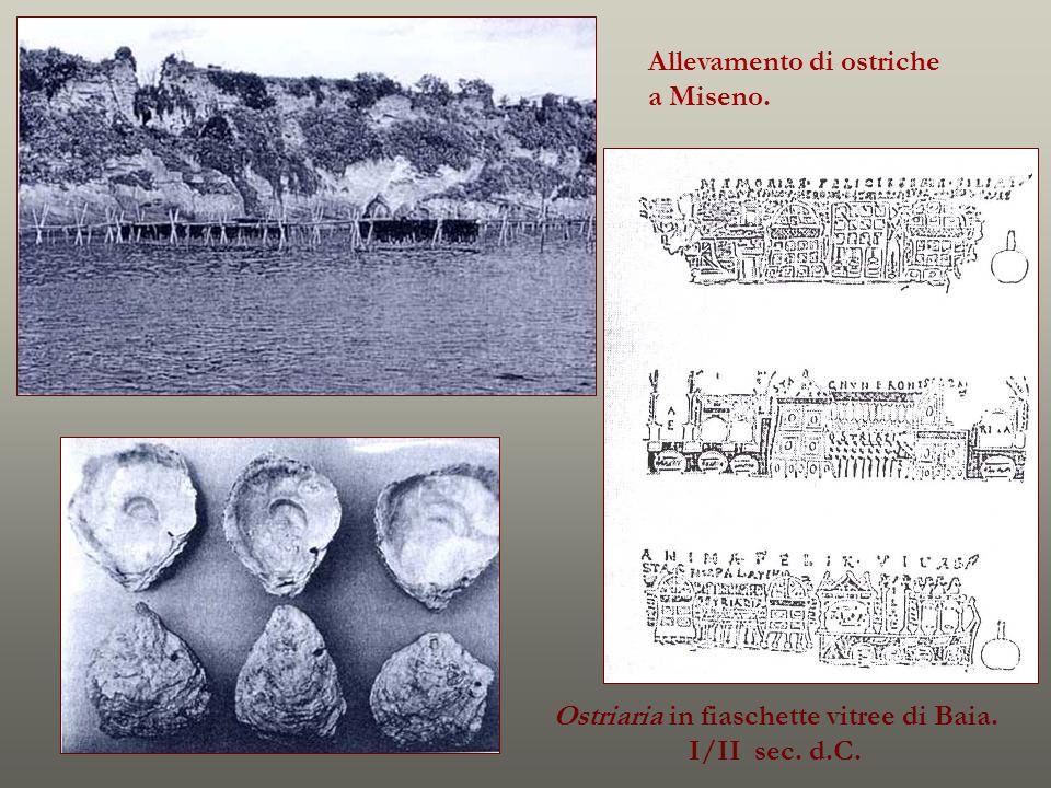 Allevamento di ostriche a Miseno. Ostriaria in fiaschette vitree di Baia. I/II sec. d.C.