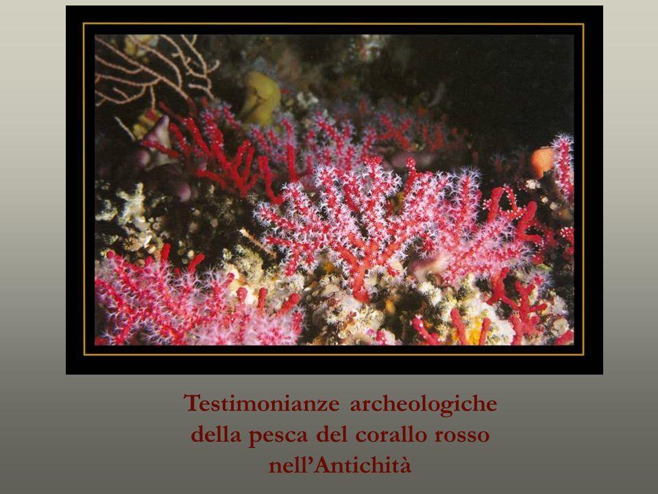 Testimonianze archeologiche della pesca del corallo rosso nellAntichità