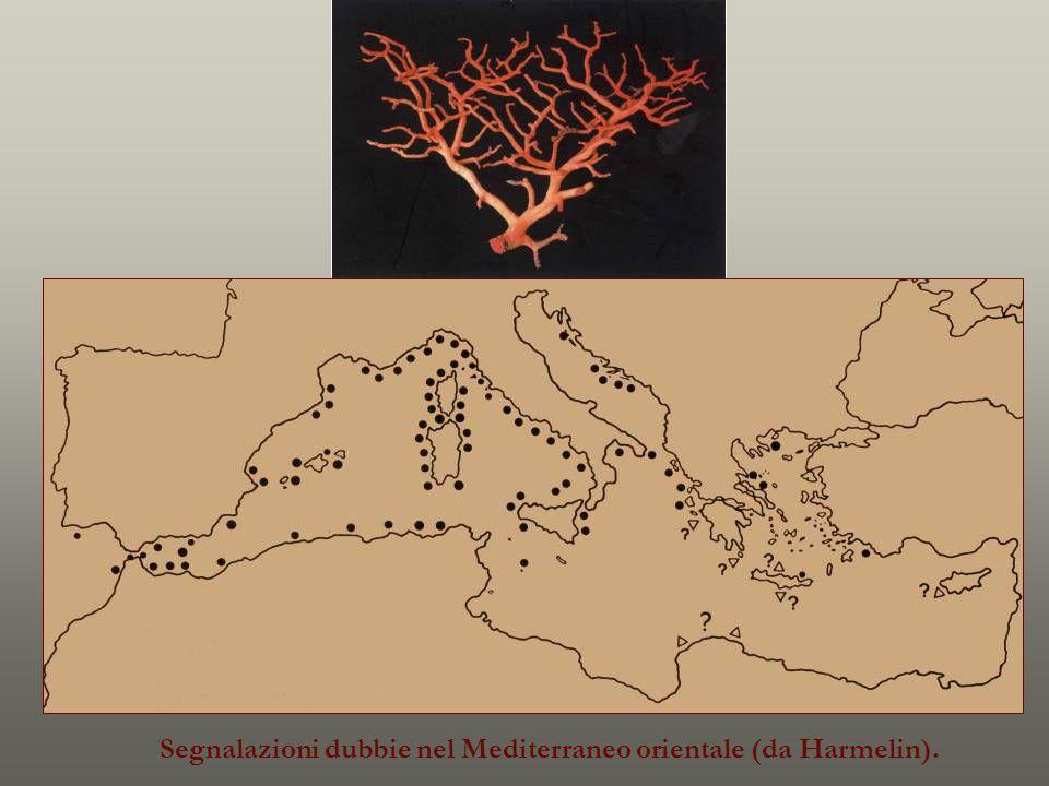 Segnalazioni dubbie nel Mediterraneo orientale (da Harmelin).
