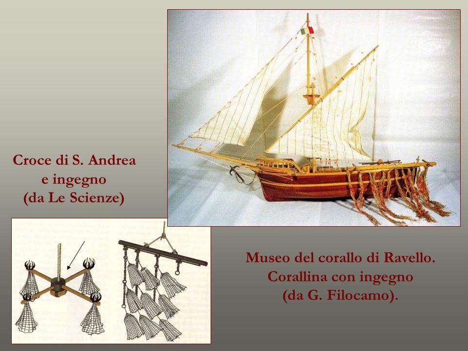 Croce di S. Andrea e ingegno (da Le Scienze) Museo del corallo di Ravello. Corallina con ingegno (da G. Filocamo).