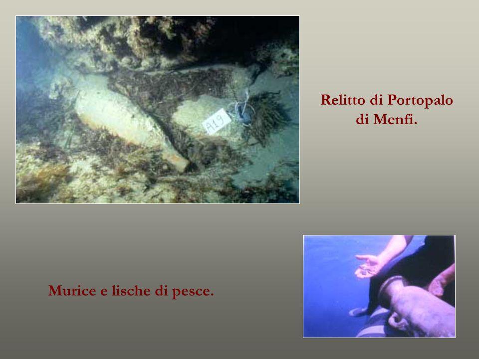 Murice e lische di pesce. Relitto di Portopalo di Menfi.