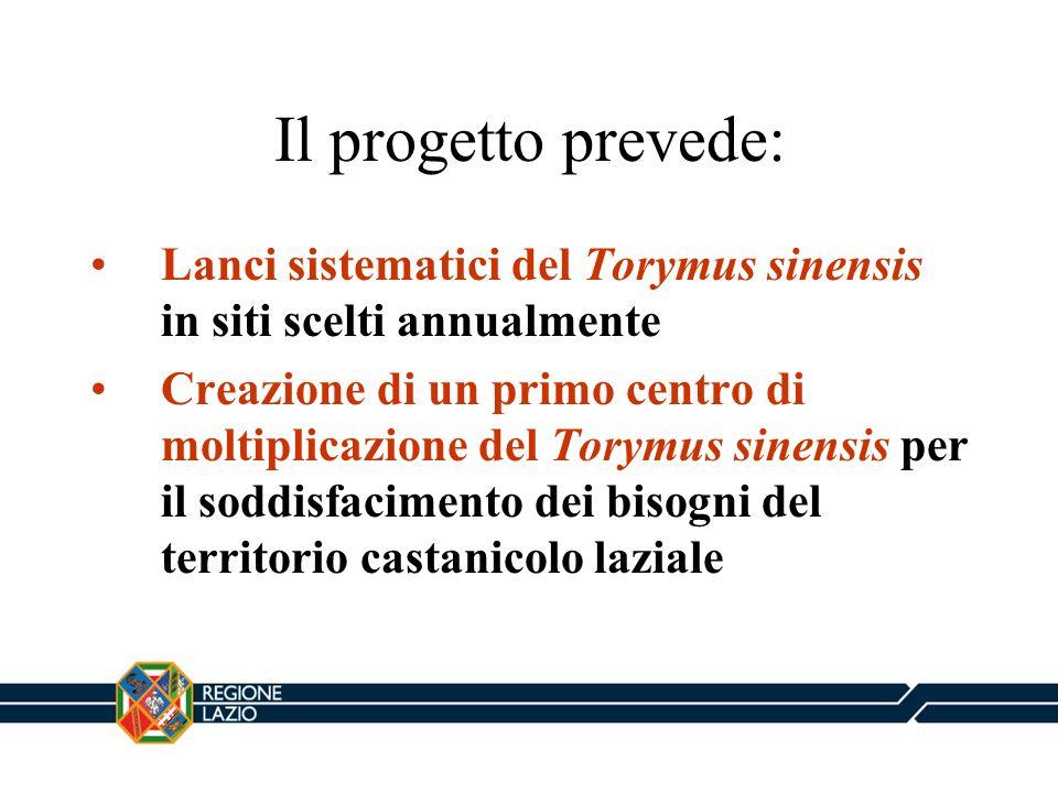 Il progetto prevede: Lanci sistematici del Torymus sinensis in siti scelti annualmente Creazione di un primo centro di moltiplicazione del Torymus sin