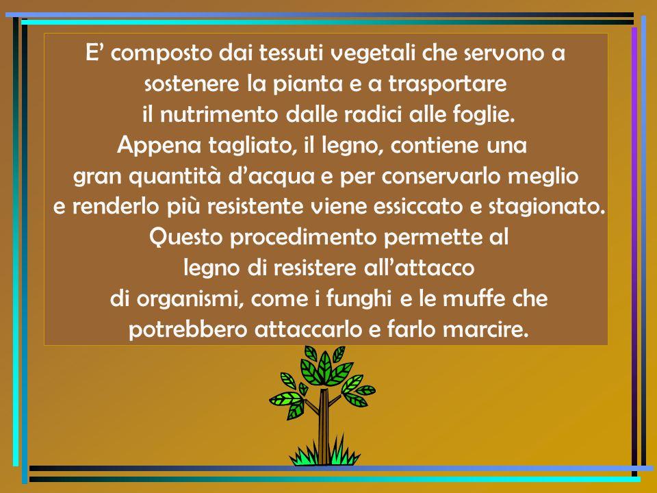 E composto dai tessuti vegetali che servono a sostenere la pianta e a trasportare il nutrimento dalle radici alle foglie. Appena tagliato, il legno, c