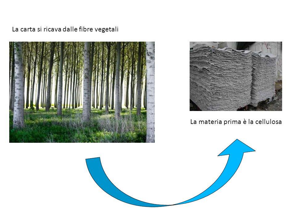 La carta si ricava dalle fibre vegetali La materia prima è la cellulosa