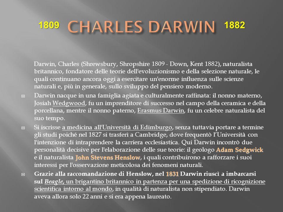 18091882 Darwin, Charles (Shrewsbury, Shropshire 1809 - Down, Kent 1882), naturalista britannico, fondatore delle teorie dell'evoluzionismo e della se