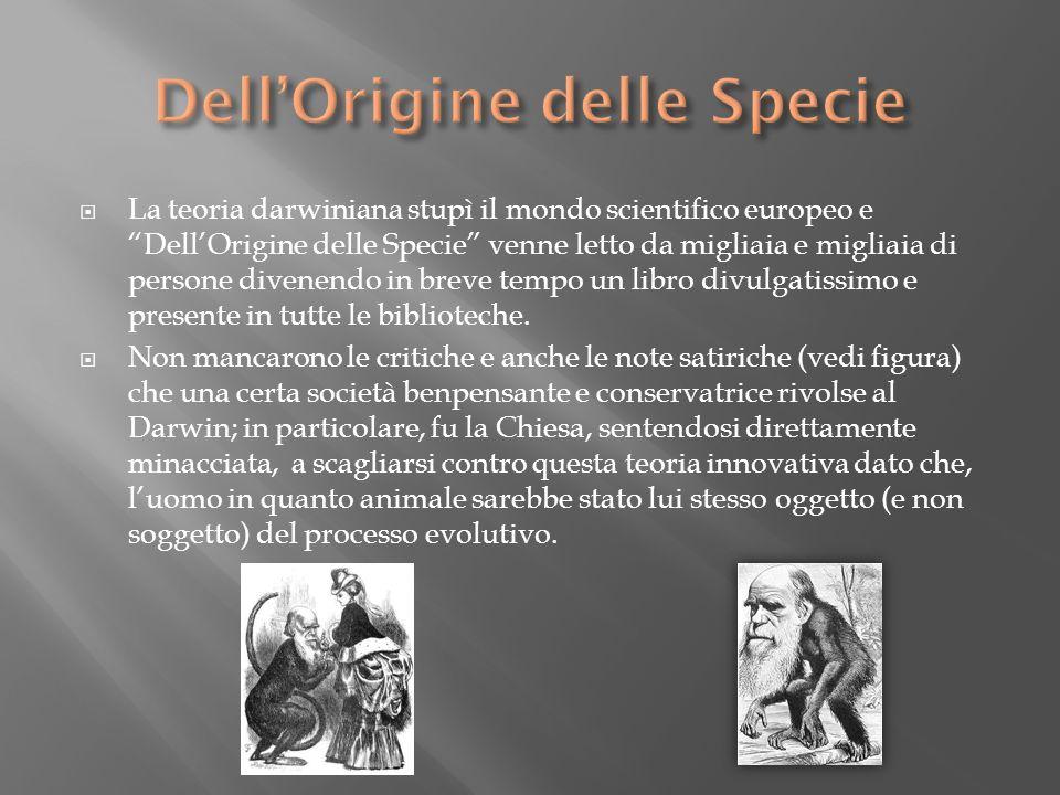 La teoria darwiniana stupì il mondo scientifico europeo e DellOrigine delle Specie venne letto da migliaia e migliaia di persone divenendo in breve te