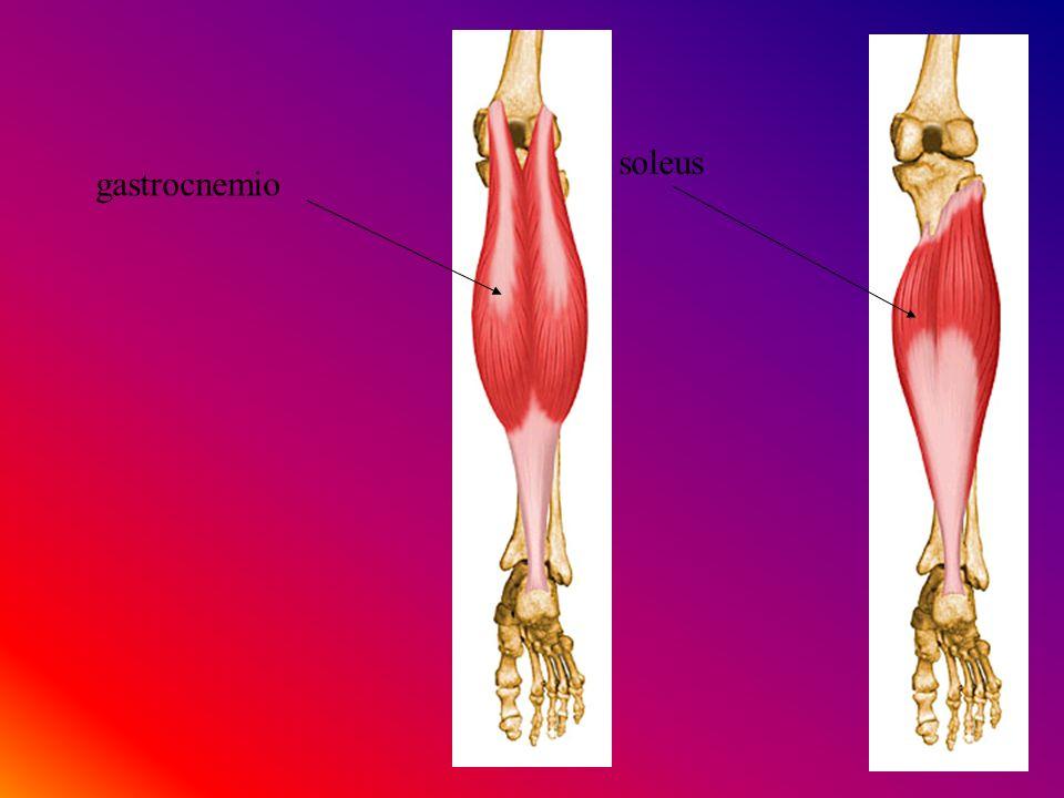 gastrocnemio soleus