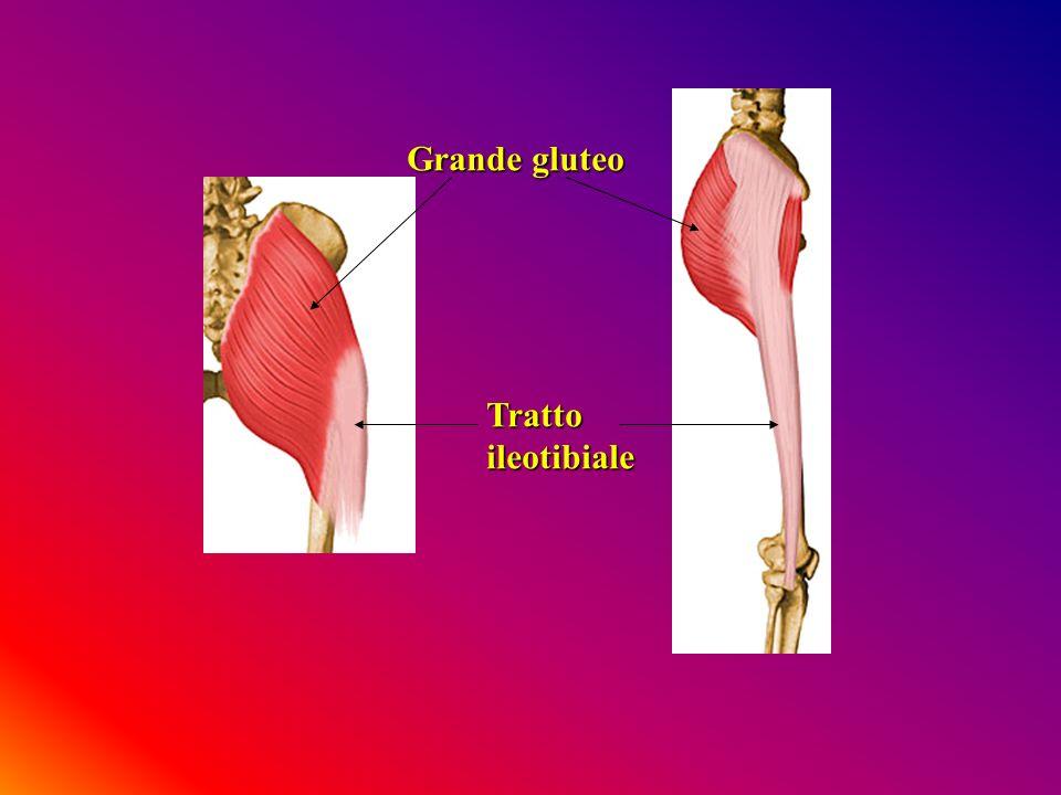 Grande gluteo Trattoileotibiale