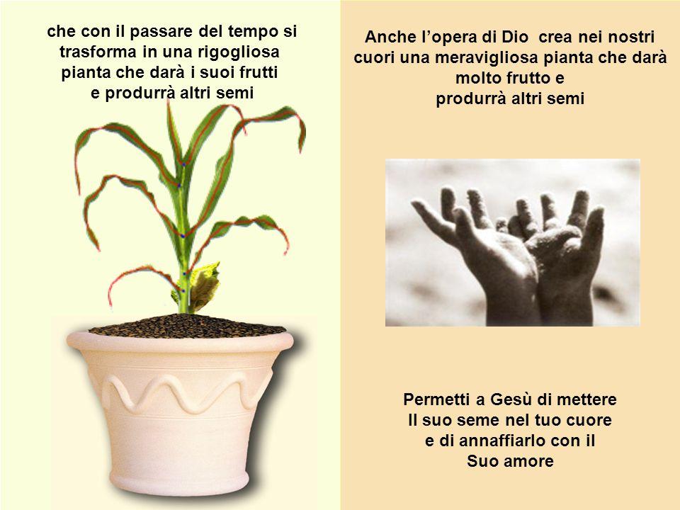 che con il passare del tempo si trasforma in una rigogliosa pianta che darà i suoi frutti e produrrà altri semi Anche lopera di Dio crea nei nostri cu