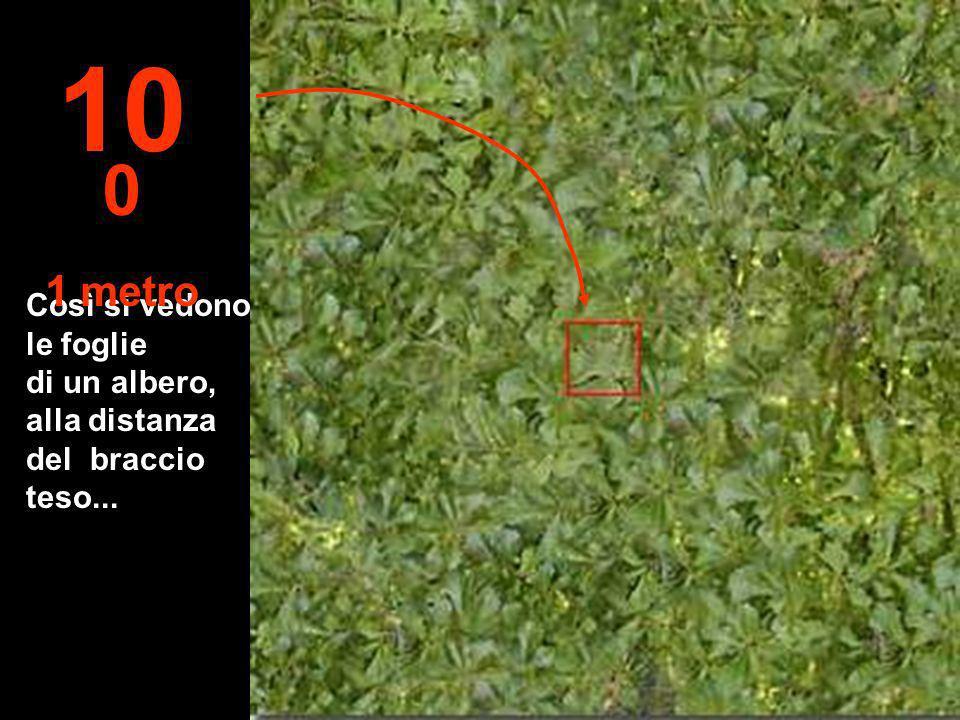 Così si vedono le foglie di un albero, alla distanza del braccio teso... 10 0 1 metro