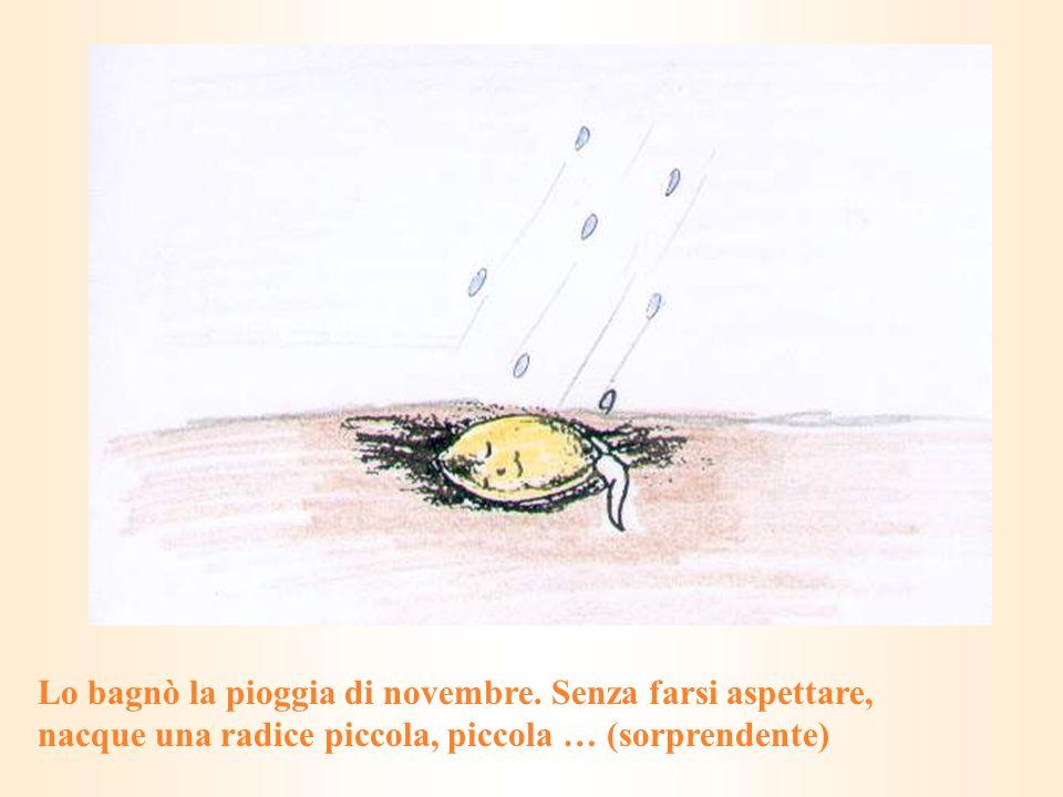 Lo bagnò la pioggia di novembre. Senza farsi aspettare, nacque una radice piccola, piccola … (sorprendente)