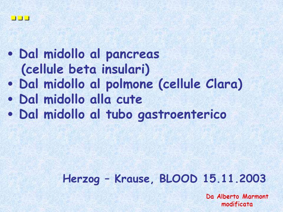 … Dal midollo al pancreas (cellule beta insulari) Dal midollo al polmone (cellule Clara) Dal midollo alla cute Dal midollo al tubo gastroenterico Herz