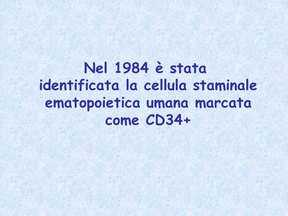 Nel 1984 è stata identificata la cellula staminale ematopoietica umana marcata come CD34+