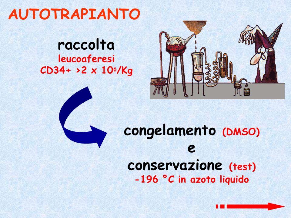 AUTOTRAPIANTO raccolta leucoaferesi CD34+ >2 x 10 6 /Kg congelamento (DMSO) e conservazione (test) -196 °C in azoto liquido