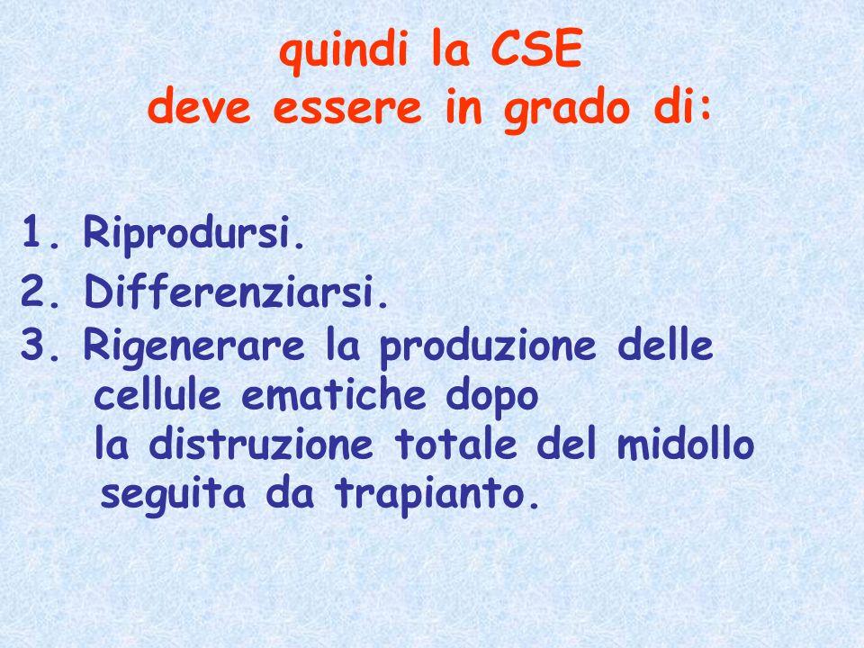 quindi la CSE deve essere in grado di: 1. Riprodursi. 2. Differenziarsi. 3. Rigenerare la produzione delle cellule ematiche dopo la distruzione totale