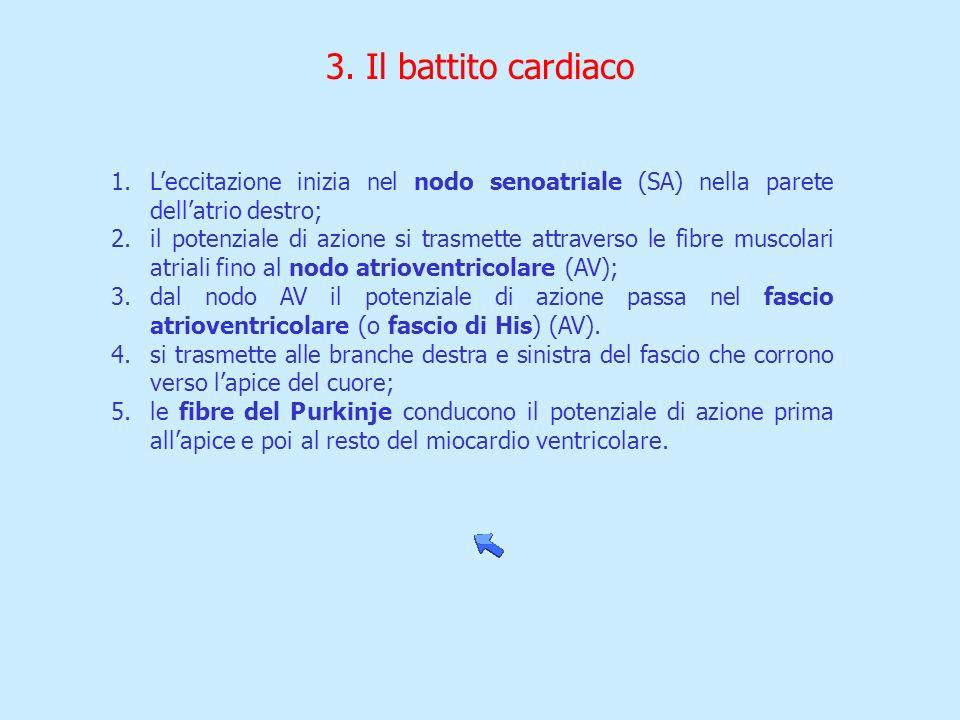 3. Il battito cardiaco 1.Leccitazione inizia nel nodo senoatriale (SA) nella parete dellatrio destro; 2.il potenziale di azione si trasmette attravers