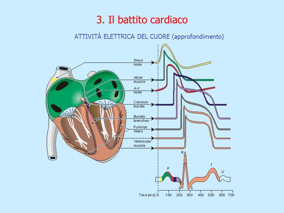 3. Il battito cardiaco ATTIVITÀ ELETTRICA DEL CUORE (approfondimento)