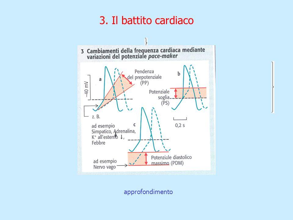 3. Il battito cardiaco approfondimento