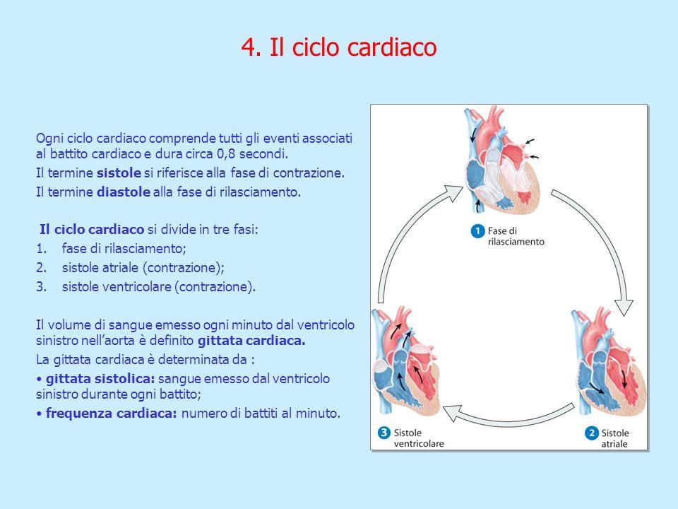 4. Il ciclo cardiaco Ogni ciclo cardiaco comprende tutti gli eventi associati al battito cardiaco e dura circa 0,8 secondi. Il termine sistole si rife