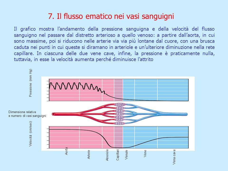 7. Il flusso ematico nei vasi sanguigni Pressione (mm Hg) Dimensione relative e numero di vasi sanguigni Velocità (cm/sec) Aorta Arterie Atreriole Cap