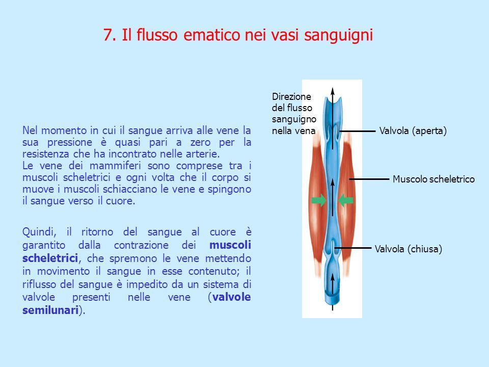7. Il flusso ematico nei vasi sanguigni Nel momento in cui il sangue arriva alle vene la sua pressione è quasi pari a zero per la resistenza che ha in