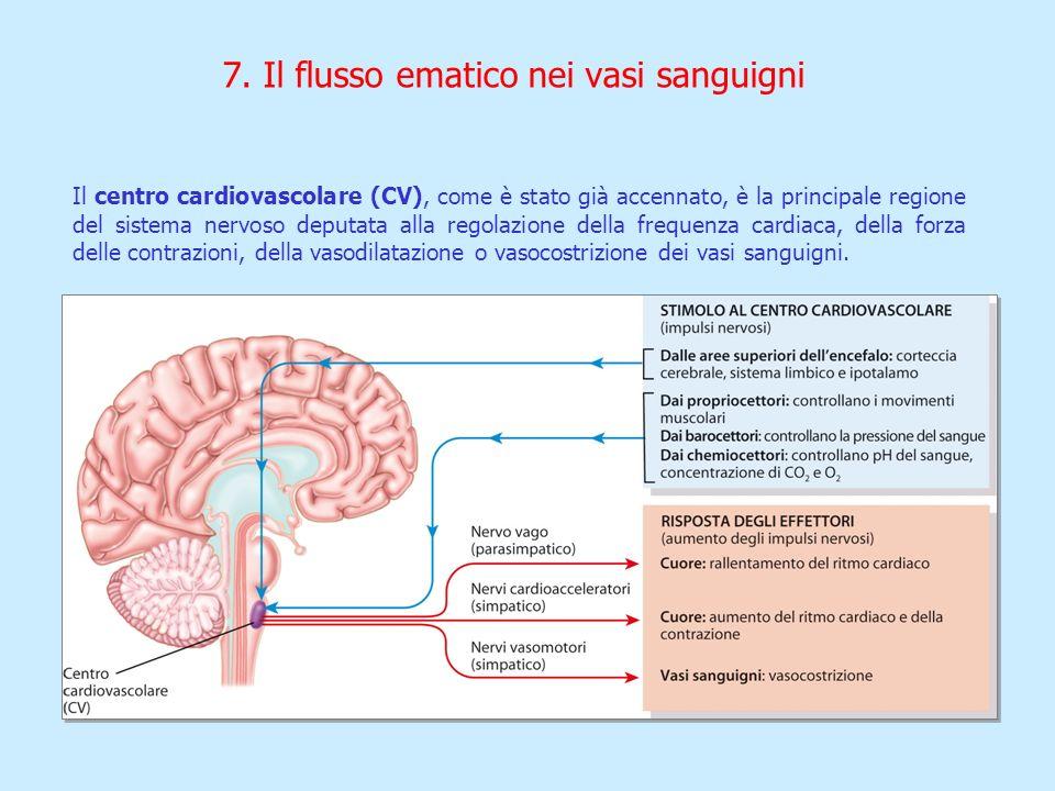 7. Il flusso ematico nei vasi sanguigni Il centro cardiovascolare (CV), come è stato già accennato, è la principale regione del sistema nervoso deputa