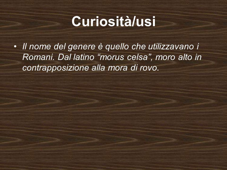Curiosità/usi Il nome del genere è quello che utilizzavano i Romani. Dal latino morus celsa, moro alto in contrapposizione alla mora di rovo.