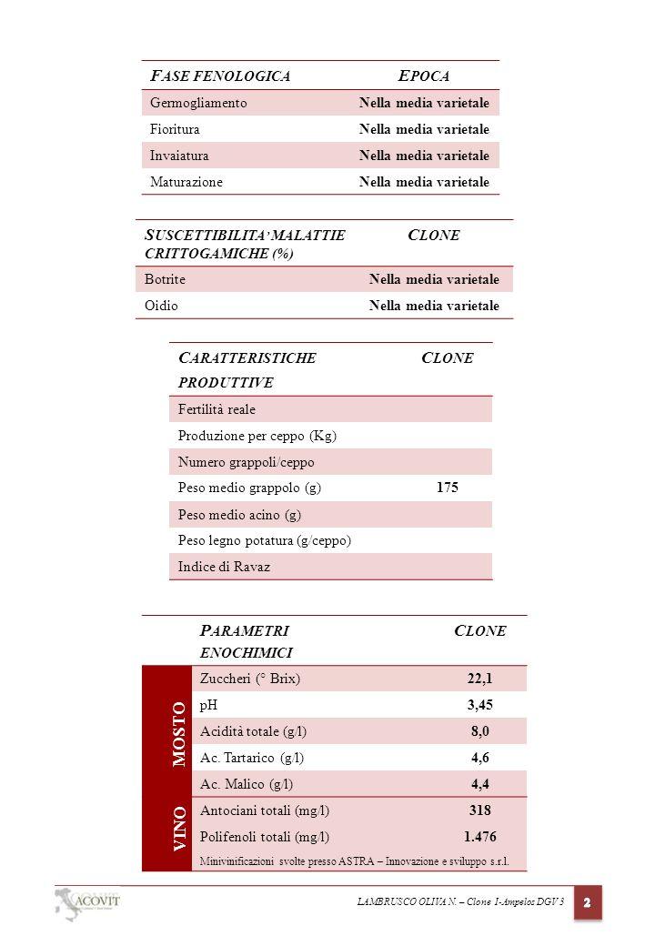 LAMBRUSCO OLIVA N. – Clone I-Ampelos DGV 3 S USCETTIBILITA MALATTIE CRITTOGAMICHE (%) C LONE BotriteNella media varietale OidioNella media varietale C