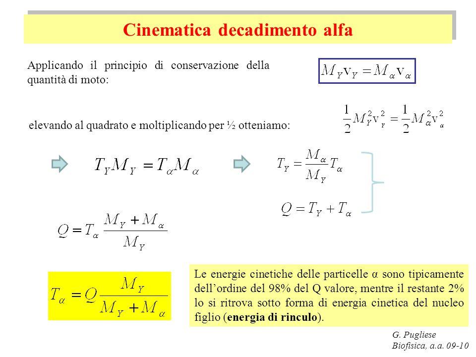 Cinematica decadimento alfa G. Pugliese Biofisica, a.a. 09-10 elevando al quadrato e moltiplicando per ½ otteniamo: Le energie cinetiche delle partice